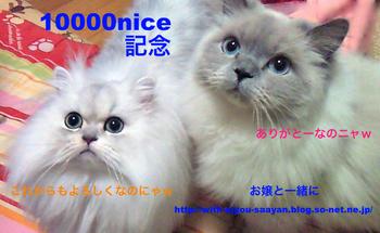 m_10000niceE8A898E5BFB5E382ABE383BCE38389.jpg