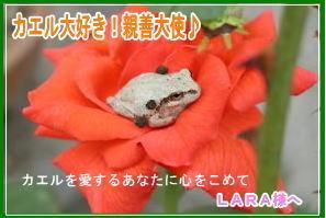 m_P81000056111.jpg