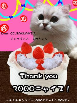 2011-1-1のコピー.jpg