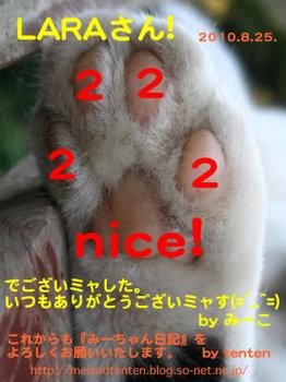 2222nice!LARAE38195E38293.jpg