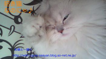 m_201005161524001.jpg